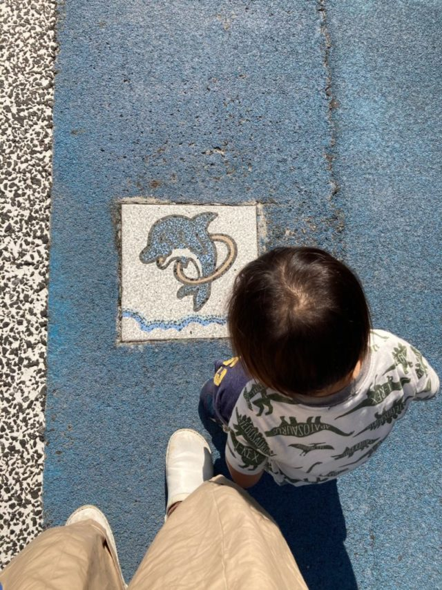 須磨水族館イルカ