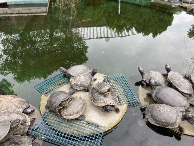 須磨水族館亀楽園